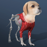 Idle Pet – Create cell by cell (MOD, Unlimited Money) 4.9