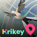 Krikey (MOD, Unlimited Money) 2.11.0