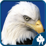 Birds Jigsaw Puzzles Game (MOD, Unlimited Money) 1.9.13