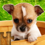 Dogs Jigsaw Puzzles Game – For Kids & Adults 🐶 (MOD, Unlimited Money) 26.4