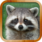 Kids Learn About Animals (MOD, Unlimited Money) 8.1