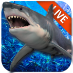 Live Wallpaper with Shark in the Ocean (Premium Cracked) 2.2.0.2540