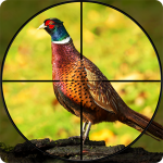 Pheasant Shooter: Crossbow Birds Hunting FPS Games (MOD, Unlimited Money) 1.1