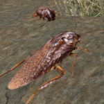 Cockroach Simulator – animal game (MOD, Unlimited Money) 5.3
