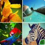 Skid15 : My picture photo puzzle (MOD, Unlimited Money) 1.5.2