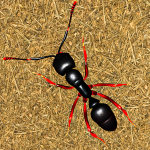 Ant Insect Games – Queen Fire Ant Simulator (MOD, Unlimited Money)